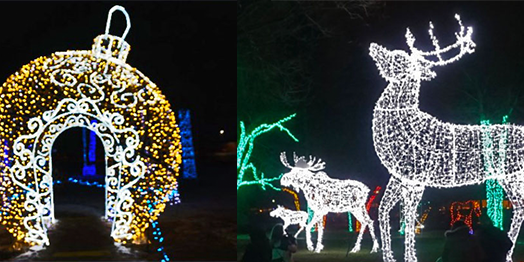 Wild Lights At The Detroit Zoo Pride Source